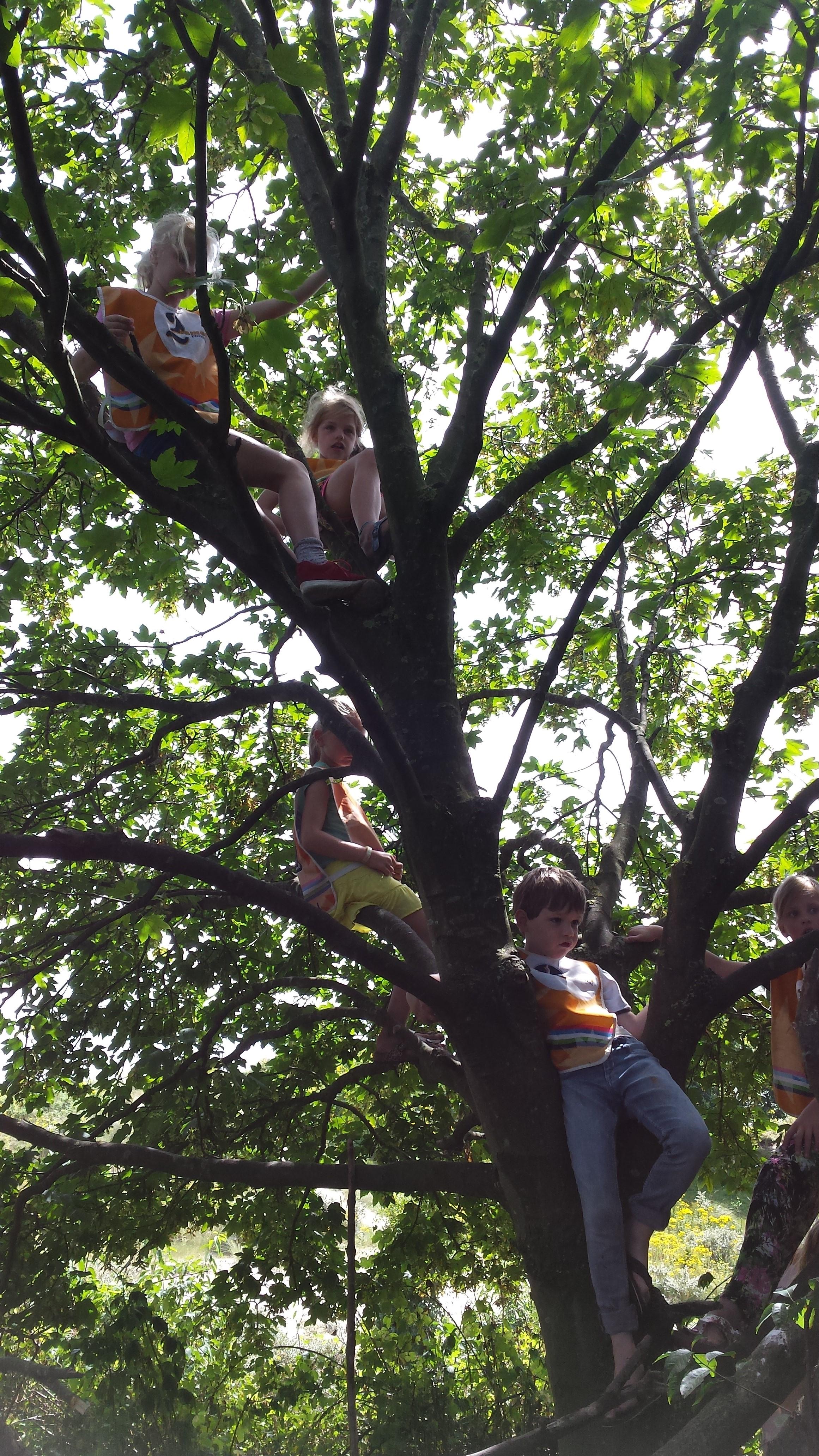 wanneer heb jij voor het laatst in een boom geklommen?