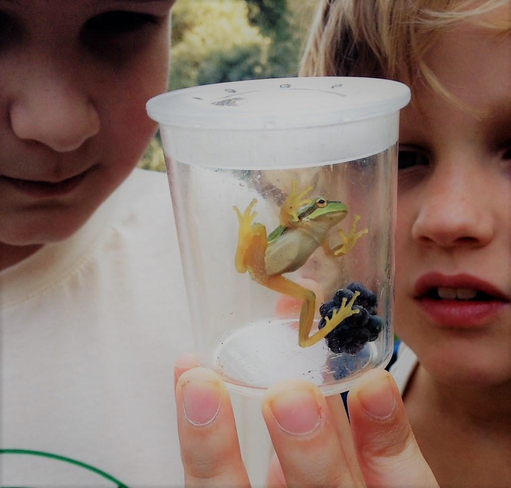 de jongens (9 en 10 jaar) hebben een boomkikker gevonden