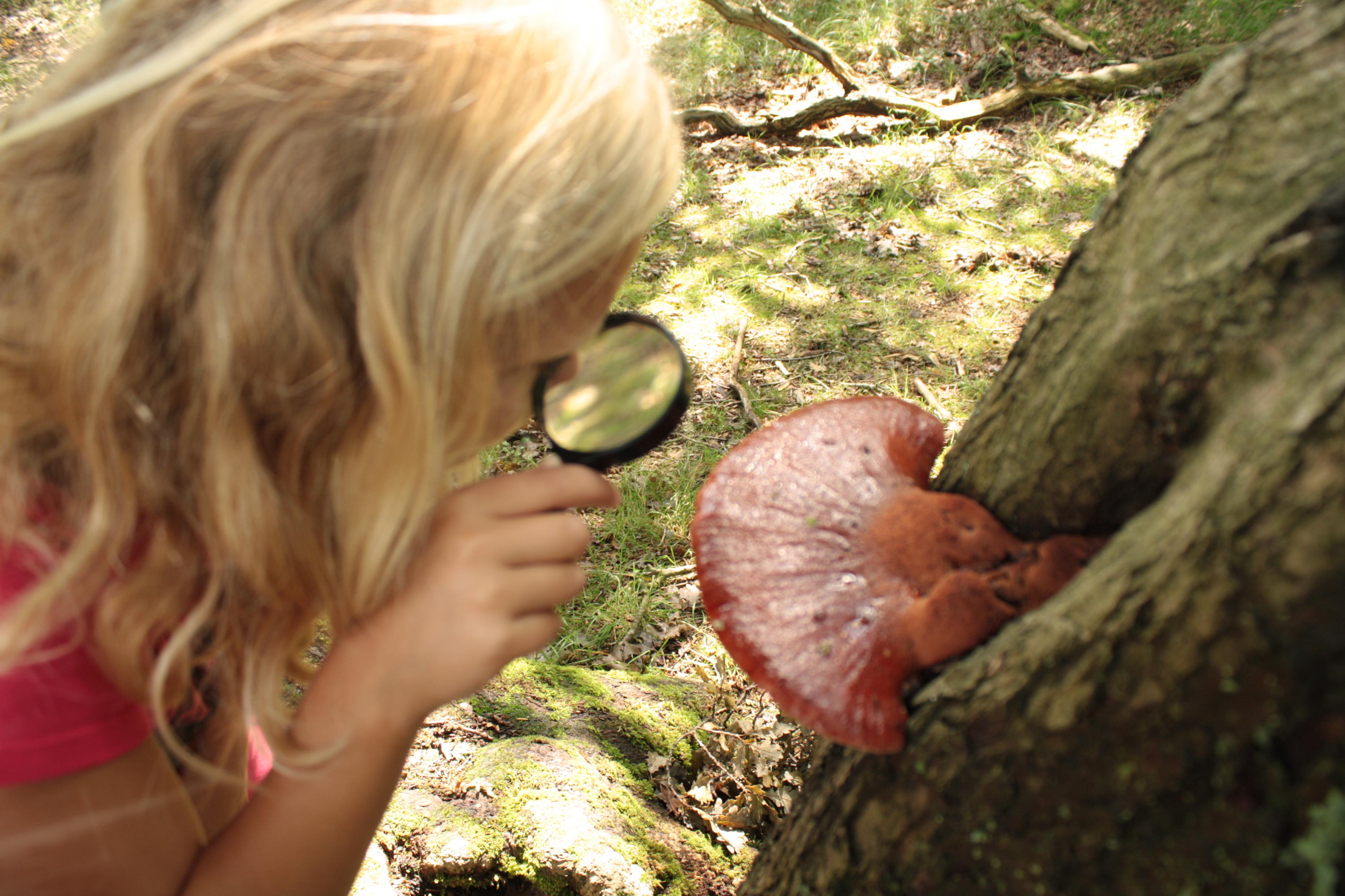 paddenstoelen zoeken met elkaar