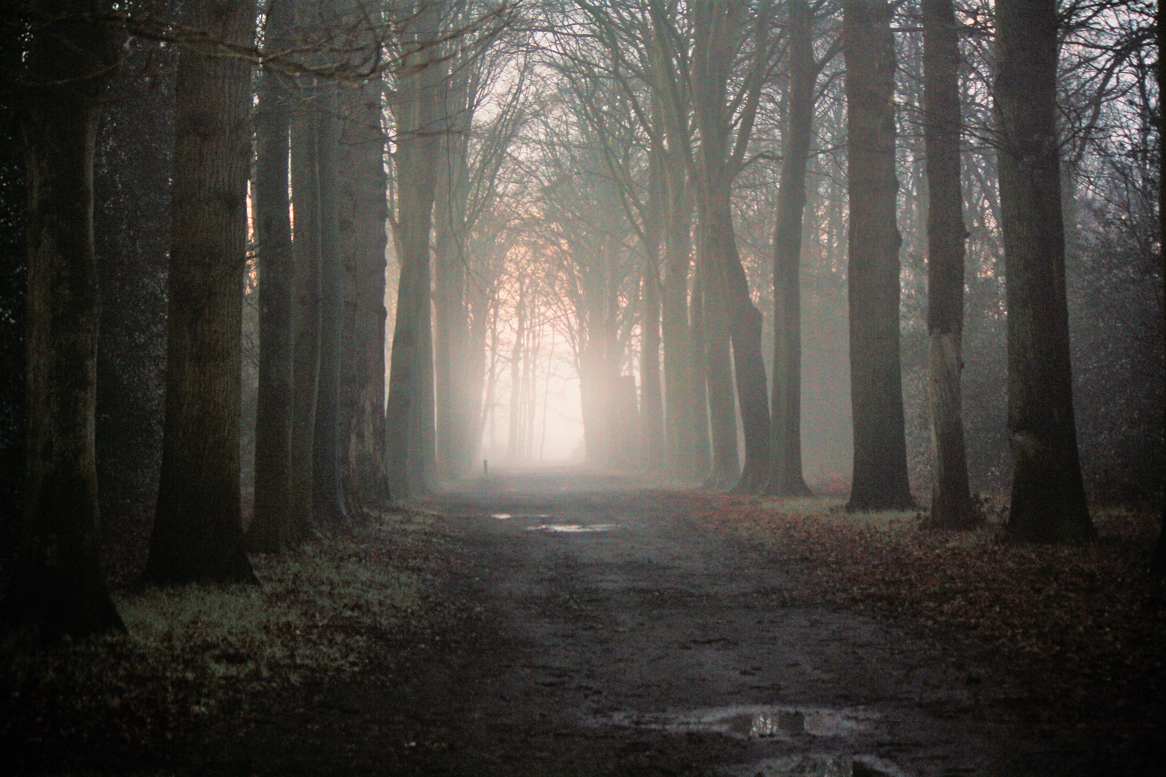 Denk niet zwart wit maar aan de kleur van je hart. Songtekst Frank Boeijen.
